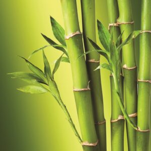 building in Madison, bamboo in Madison, bamboo in building, building with bamboo, building in Waunakee