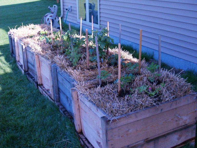 Straw Bale Gardening – A Whole New Way to Garden