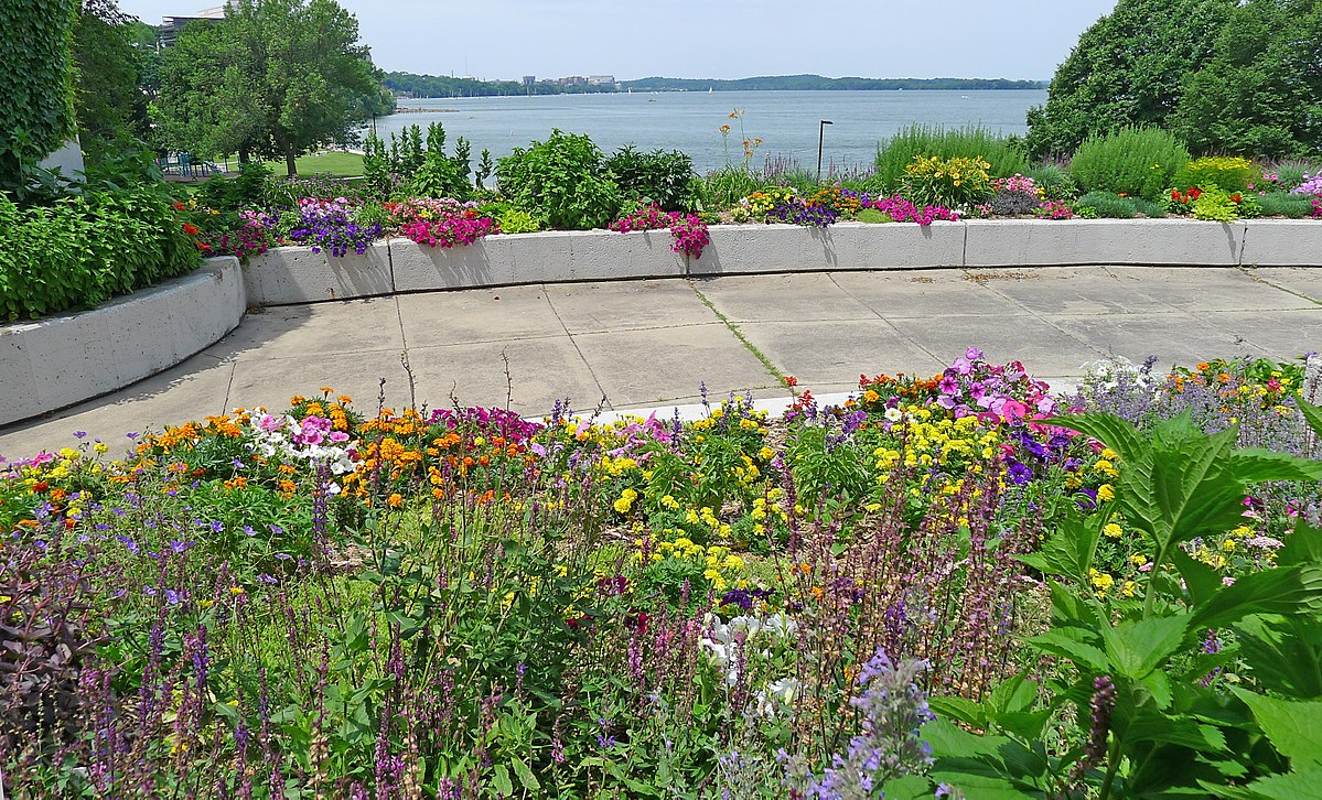Low Maintenance Plants That Thrive In Madison Gardens